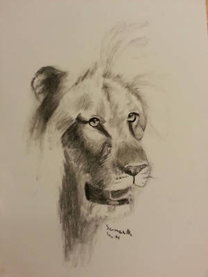 Charcoal Lion by DaughterOfRen