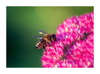 Flowerpower Bee by K4PP4