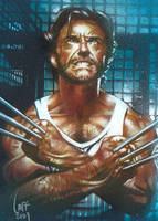 Wolverine - Sketch Card by JeffLafferty