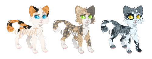 Calico Adopts by MossclawArt