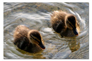 2 little ducks by Test-Grave