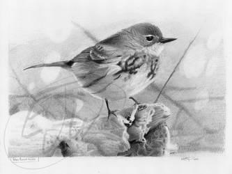 Warbler Bird by Paperbag-Ninja