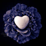 Flower of Love by TammyPhotography