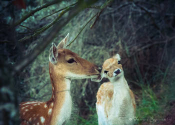Mommy Kisses by TammyPhotography