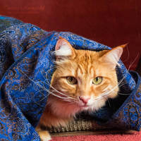 Gypsy Cat by TammyPhotography
