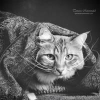 Dali Cat by TammyPhotography