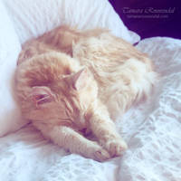Dozing off by TammyPhotography