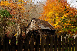 Contrasting fall colors by MikeysPhotos