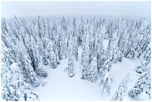 Deep snow forest by vjahola