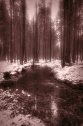 Forest Bond by vjahola