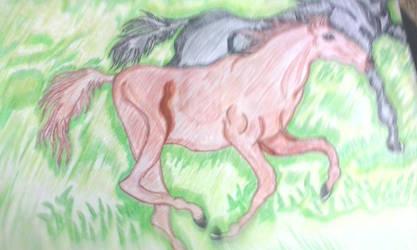 wild horse by RufusShinrareno