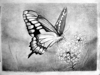 Le Butterfly. by JCoolArts
