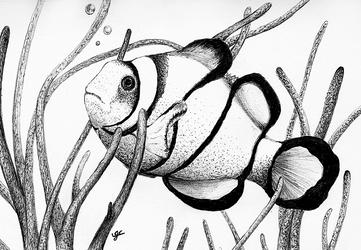 Clown Fish - Ball Point Pen. by JCoolArts