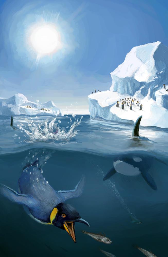 Antarctica by stuffed