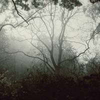 Misty woods by blumilein