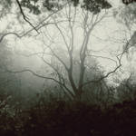 Misty woods by blumilein