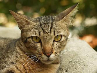 Stray Cats... by mohamadfazli