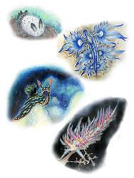 Nudibranch Study by MsRaggaMuffin