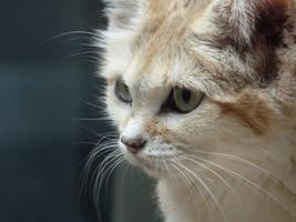 Sand Cat by Fenmar