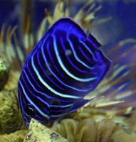Fish 05 by Treeclimber-Stock