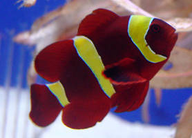 fish 20 by Treeclimber-Stock