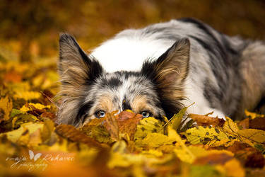 Hiding? by Majchy