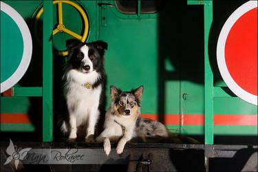 Runaway train... by Majchy