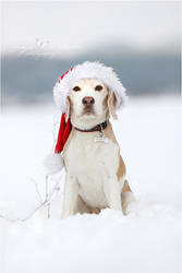Santa's helper... by Majchy