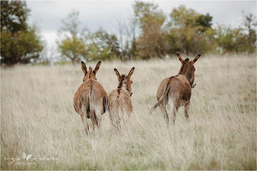 Donkey family by Majchy