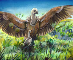 Thesis - Griffon Vulture by windfalcon