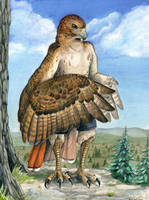 Red-Tailed Hawk Anthro by windfalcon
