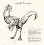 Seiquill Anatomy by windfalcon