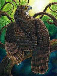 Madagascar Serpent Eagle by windfalcon