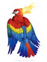 Scarlet Macaw Phoenix by windfalcon