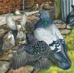 North American Invasive Birds by windfalcon