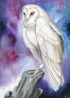 Galaxy Owl by windfalcon