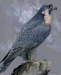 Athena Dreams by windfalcon