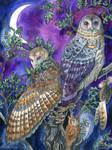 Night Magic by windfalcon