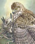 Nest by windfalcon