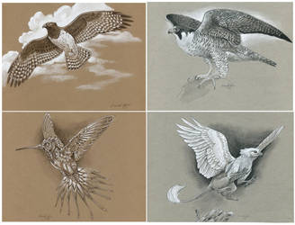 Simpled Toned Paper Sketch Commissions - OPEN by windfalcon