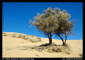 Sand Dunes - Tree1 by LemnosExplorer