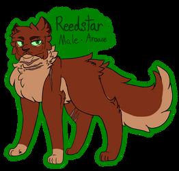 Reedstar -REF sheet 2018- by CinderedBranch
