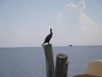 Isla Mujeres by quinti