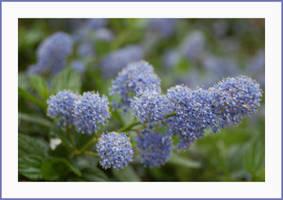 light blue by SpringLilac