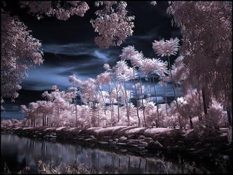 Tropical Garden infrared... by MichiLauke