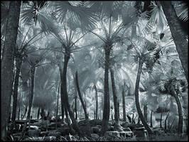 Palm Trees II infrared... by MichiLauke
