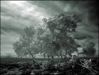 Trees on the Rocks infrared... by MichiLauke