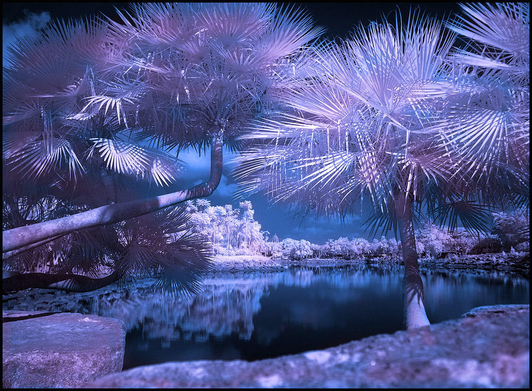 Tropical Garden VI infrared... by MichiLauke