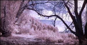 Wolni Lake pano infrared... by MichiLauke