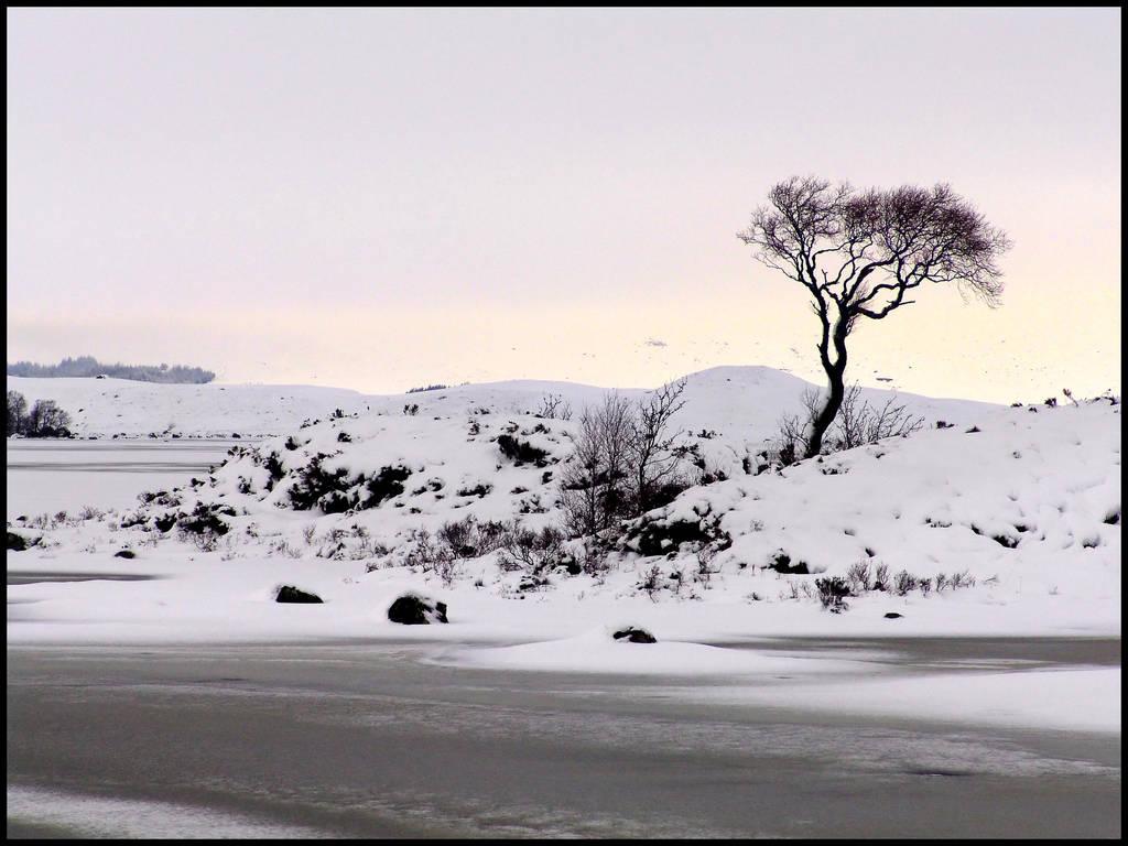 The Tree II... by MichiLauke